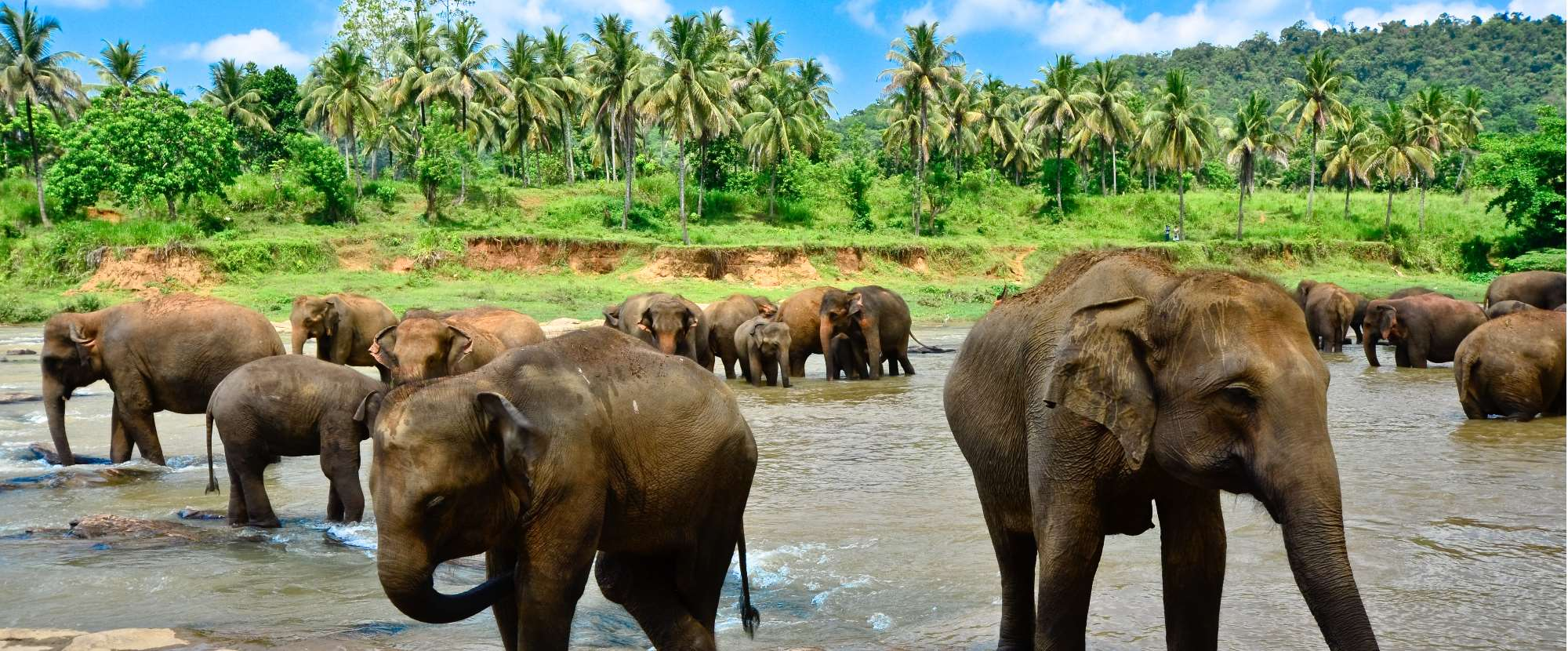 11 Incredible Places to See Wildlife in Sri Lanka