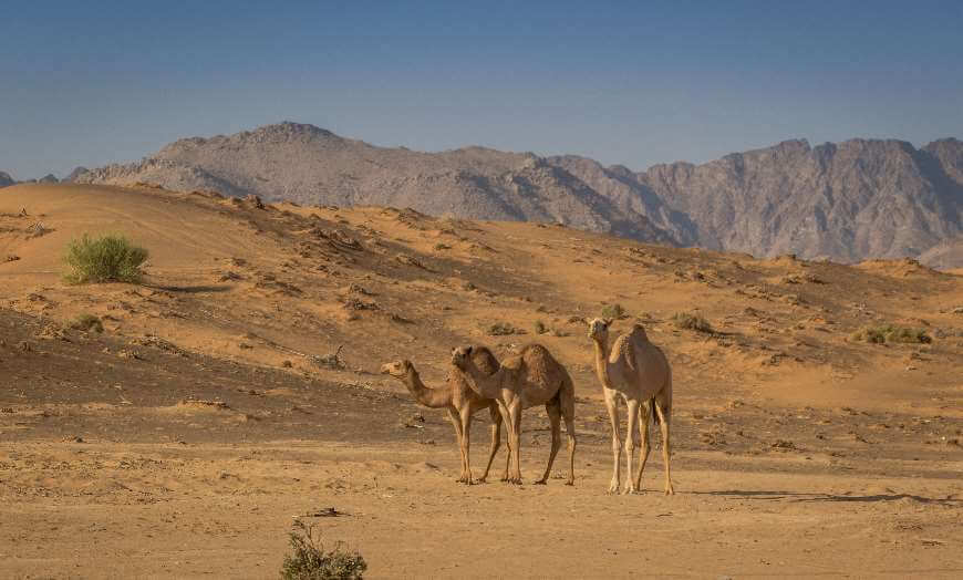 Wahiba Sands in the Omani dessert