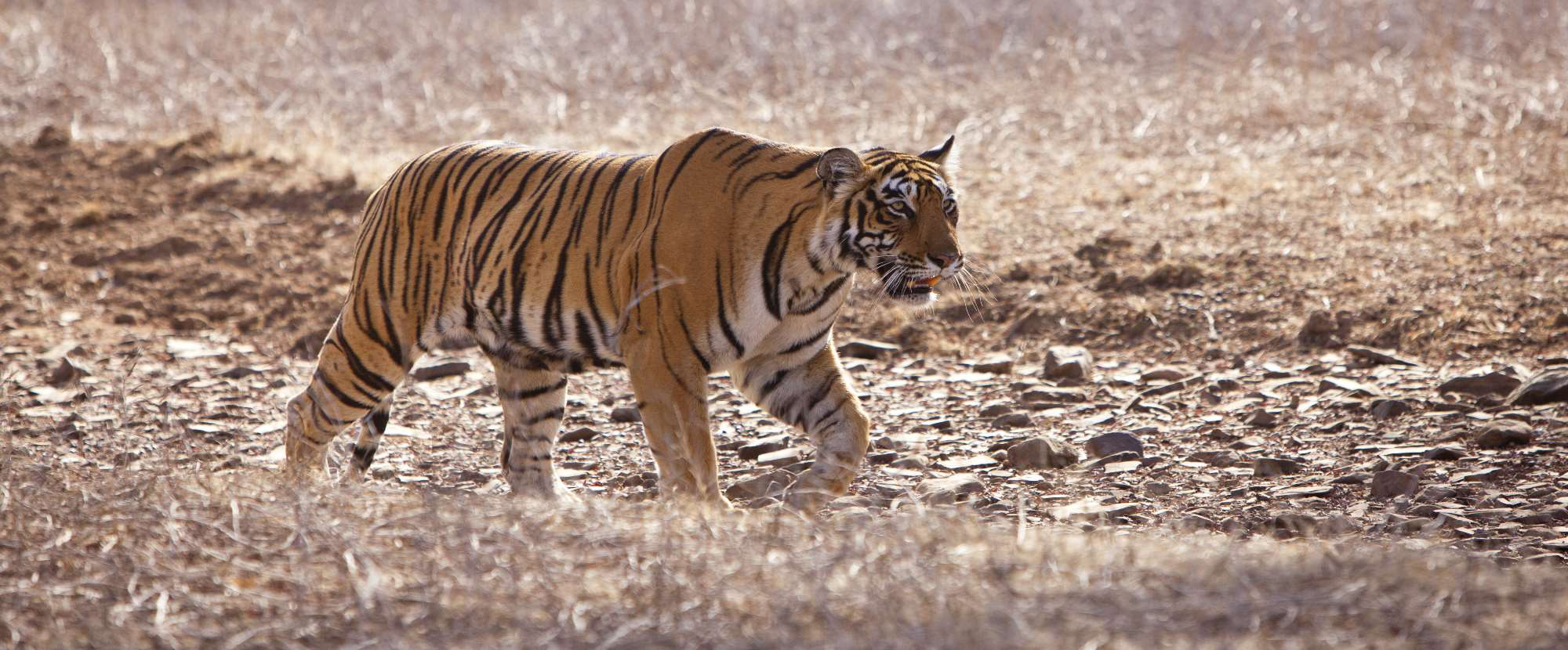 15 Incredible Places to See Wildlife in India