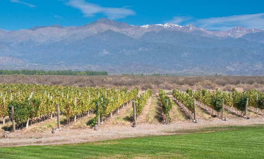 Vineyards of Mendoza with Andes in the background in Argentina