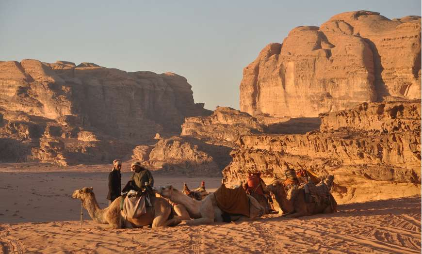Camels at bedouin camp in Wadi Rum