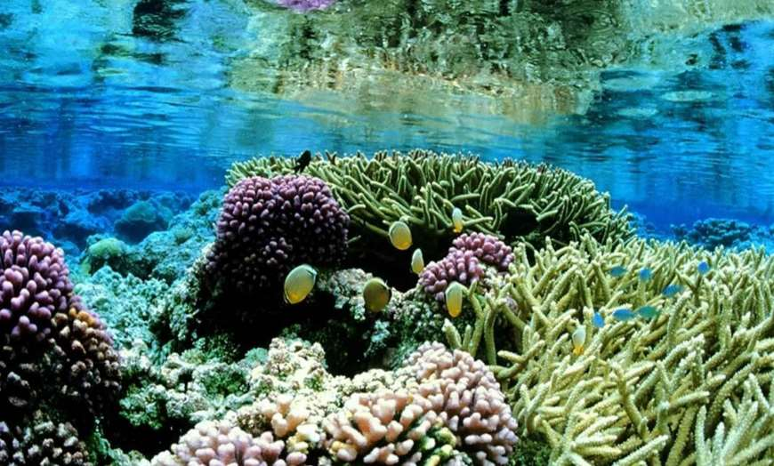 Coral reef and colourful tropical fish at Hikkaduw, Sri Lanka