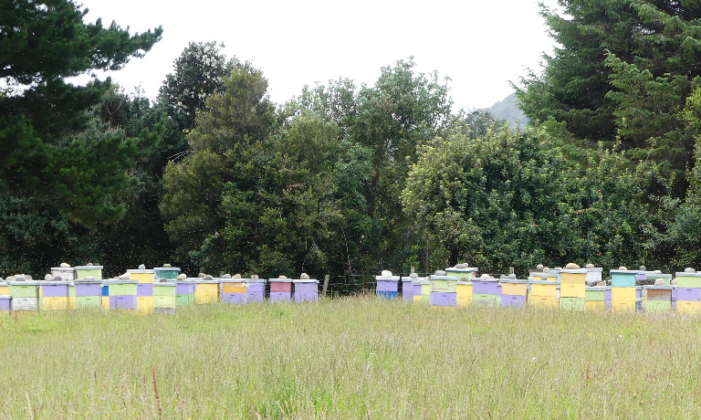 Bee hives of Chiloe
