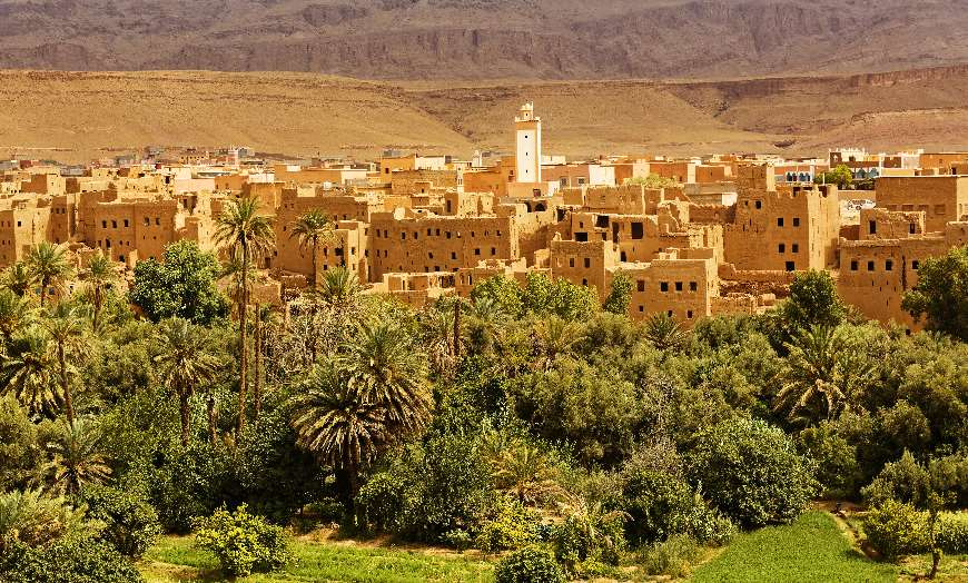 ss palm and date trees ouarzazate morocco