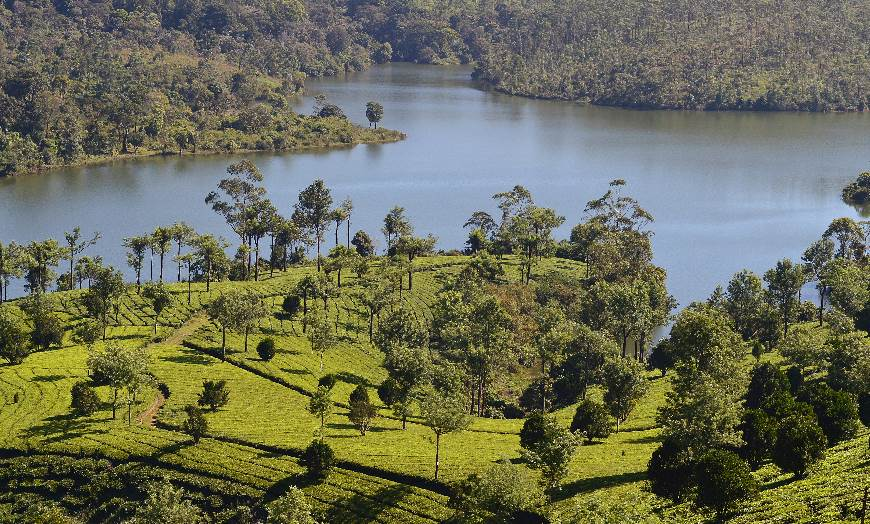 View of lush tea hills close to Periyar Lake in Kerala, India