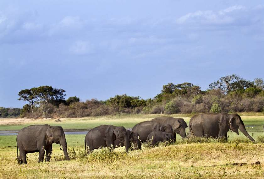 Elephants in a national park in Sri Lanka