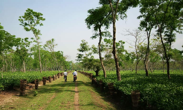 Two people cycling through lush countryside in Assam