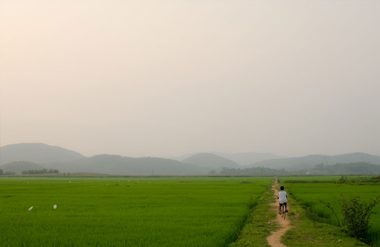 Many cycling through paddy fields in Vietnam