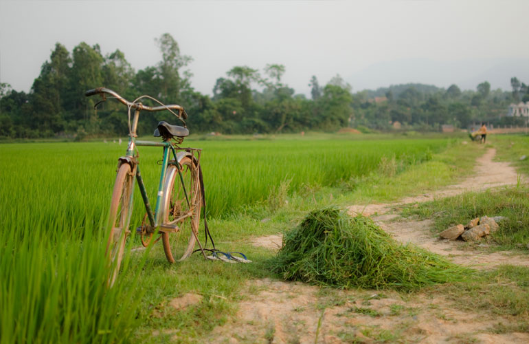 Bicycle on a path in a paddy field in Vietnam