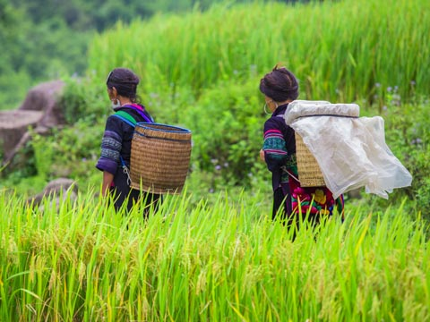 Two women in colourful clothing walking through paddy fields in Vietnam