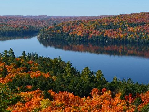 View over autumnal forest and river in Algonquin Park, Ontario