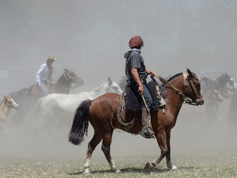 Gauchos riding horses and herding livestock in a dusty field