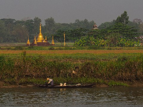 Fisherman on the Irrawaddy Delta with paddy fields and a golden temple in background